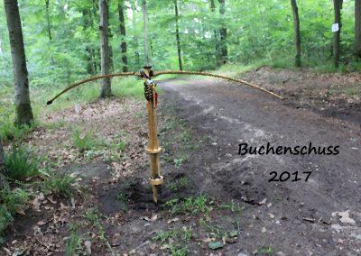 Buchenschuss 2017/1